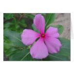 Fiji floral tarjetas