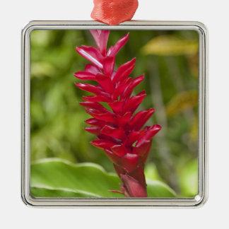 Fiji, isla de Viti Levu. Flor Adorno Cuadrado Plateado