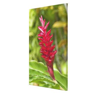 Fiji, isla de Viti Levu. Flor Impresiones En Lona