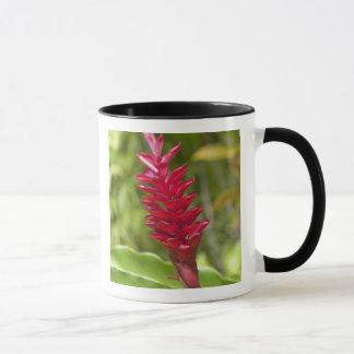Fiji, Viti Levu Island. Flower. Mug