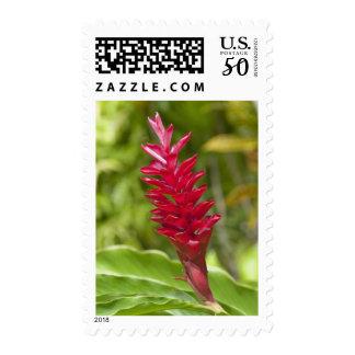 Fiji, Viti Levu Island. Flower. Postage
