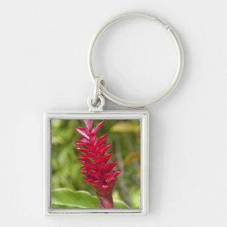 Fiji, Viti Levu Island. Flower. Silver-Colored Square Keychain
