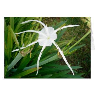 Fiji White Tendril Flower Card
