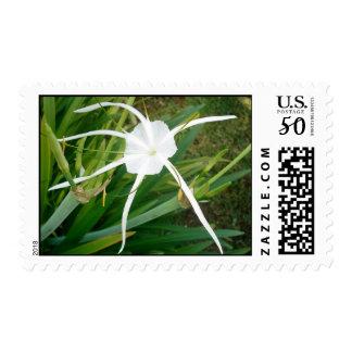Fiji White Tendril Flower Postage