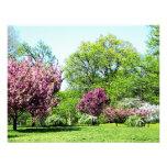 Fila de árboles florecientes comunicado personal
