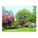 Fila de árboles florecientes postal