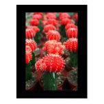 Fila de la postal de los cactus