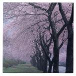 Fila de los árboles del cherryblossom azulejo cuadrado grande