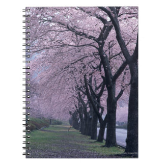 Fila de los árboles del cherryblossom libros de apuntes