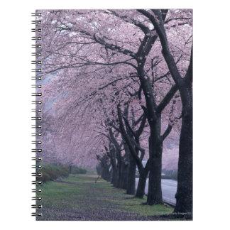 Fila de los árboles del cherryblossom libro de apuntes
