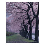 Fila de los árboles del cherryblossom póster