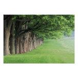 Fila majestuosa de árboles, Louisville, Kentucky Arte Fotográfico