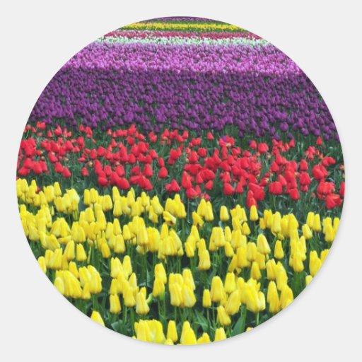 Filas coloridas de los tulipanes de la primavera etiquetas redondas