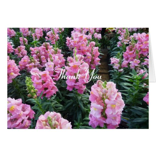 Filas de flores rosadas tarjeta