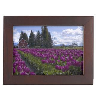 Filas de tulipanes debajo del cielo azul caja de recuerdos