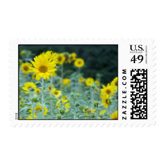 FILED OF SUNFLOWERS POSTAGE