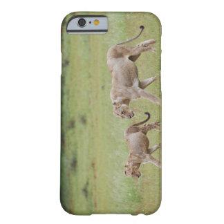 filhotes de leoa de passeio com, leão, Panthera Funda De iPhone 6 Barely There