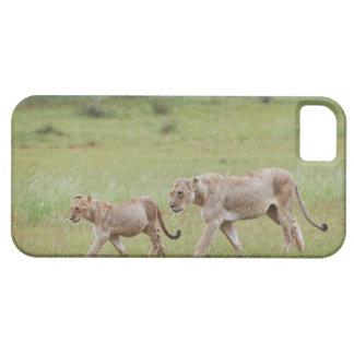 filhotes de leoa de passeio com, leão, Panthera le iPhone 5 Protectores