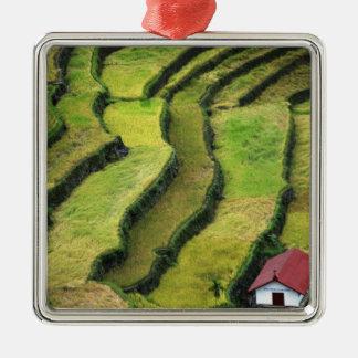 Filipinas, Batad, vista elevada del arroz Ornato