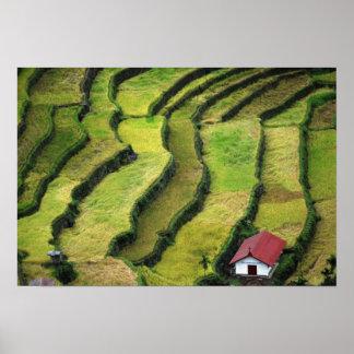 Filipinas, Batad, vista elevada del arroz Póster