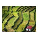 Filipinas, Batad, vista elevada del arroz Tarjetas Postales