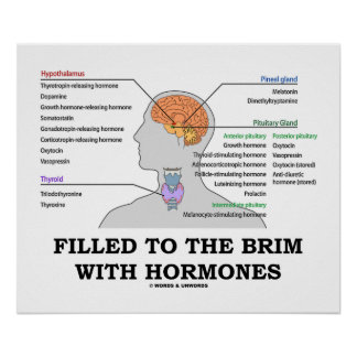Filled To The Brim With Hormones Medical Humor Poster
