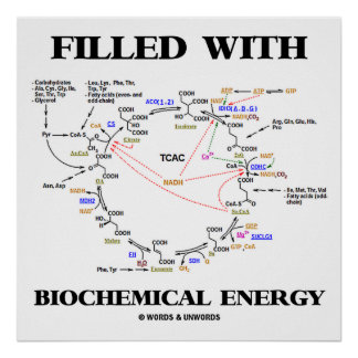 Filled With Biochemical Energy (Krebs Cycle) Poster