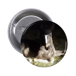 Filly Button