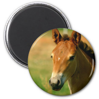 Filly Circular Magnet Magnets