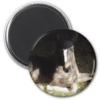 Filly Magnets