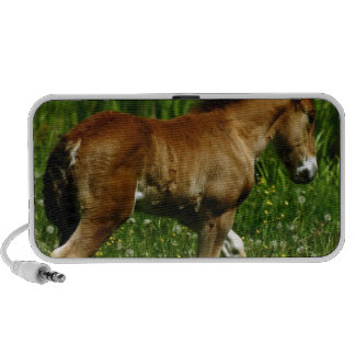 Filly Speakers