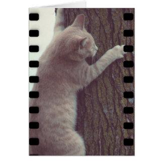 Film Rascal Card