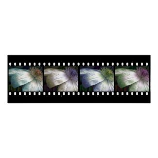 Filmstrip Flower Tones Poster