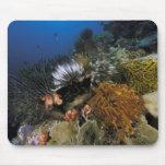 Filón coralino alfombrilla de raton