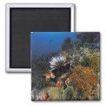 Filón coralino imán cuadrado