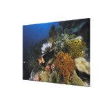 Filón coralino lona estirada galerias