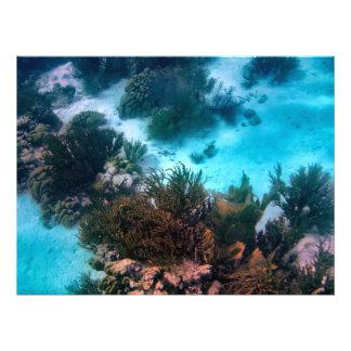 Filón de Bonairean Cojinete