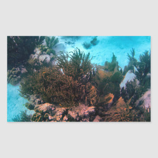 Filón de Bonairean Pegatina Rectangular