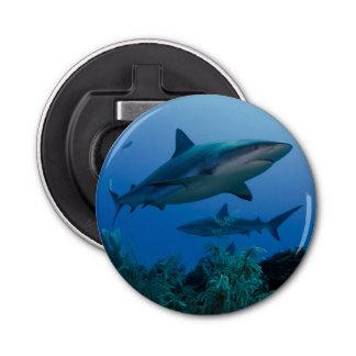 Filón del Caribe Shark Jardines de la Reina Abrebotellas Redondo