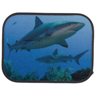Filón del Caribe Shark Jardines de la Reina Alfombrilla De Auto