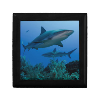 Filón del Caribe Shark Jardines de la Reina Joyero Cuadrado Pequeño