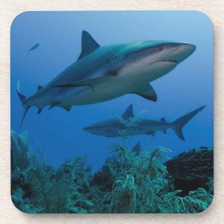 Filón del Caribe Shark Jardines de la Reina Posavaso