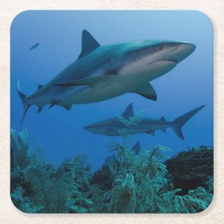 Filón del Caribe Shark Jardines de la Reina Posavasos De Cartón Cuadrado