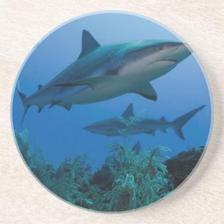 Filón del Caribe Shark Jardines de la Reina Posavasos Personalizados