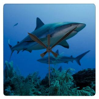 Filón del Caribe Shark Jardines de la Reina Reloj Cuadrado
