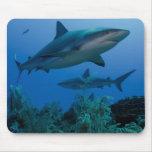Filón del Caribe Shark Jardines de la Reina Alfombrilla De Raton