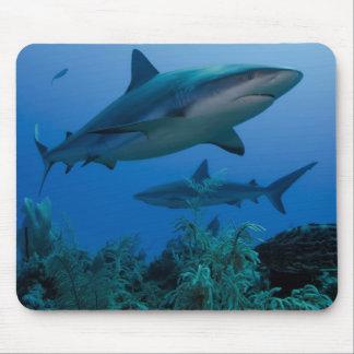 Filón del Caribe Shark Jardines de la Reina Alfombrilla De Ratón