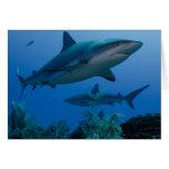 Filón del Caribe Shark Jardines de la Reina Tarjeta De Felicitación