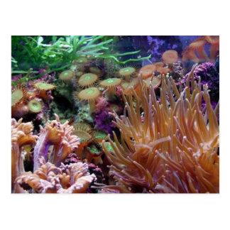 filón del corail postal