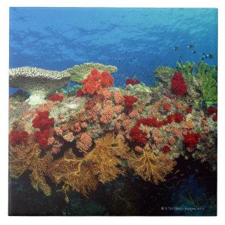 Filón escénico de los corales duros, corales suave azulejo cuadrado grande